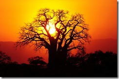 free-wallpaper-desktop-wallpaper-africa-tanzania-baobab-tree-t3rmin4t0r