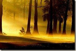 Morning-Fog-1