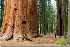 1334856376_Prairie-Creek-Redwoods-State-Park-California